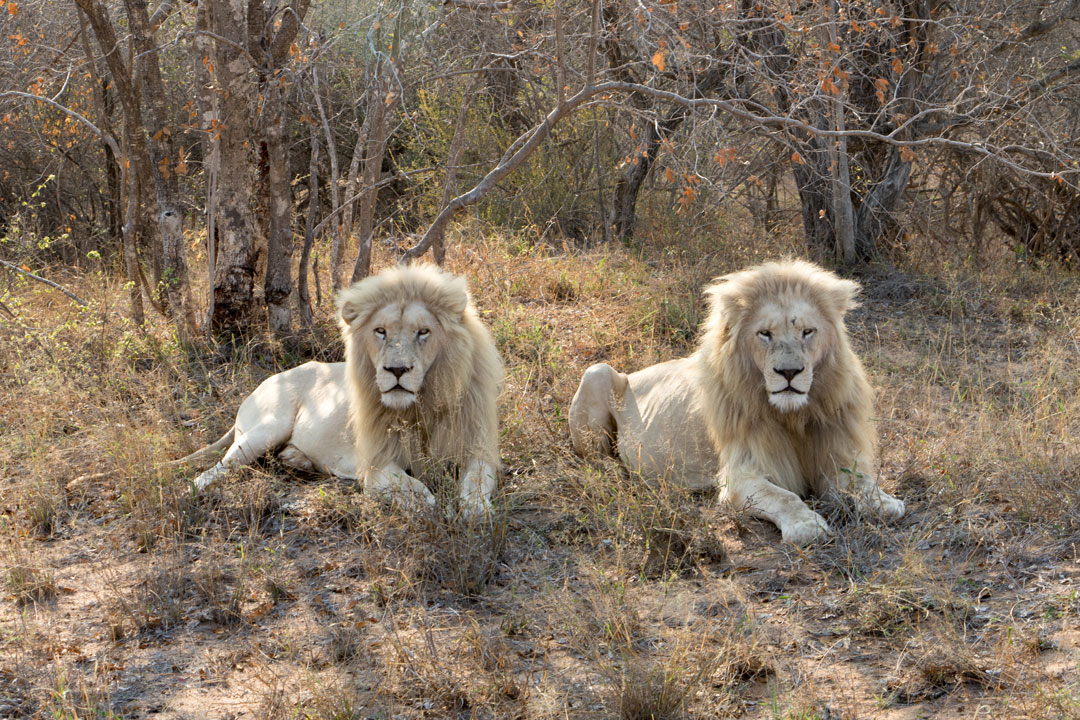 Global White Lion Protection Trust