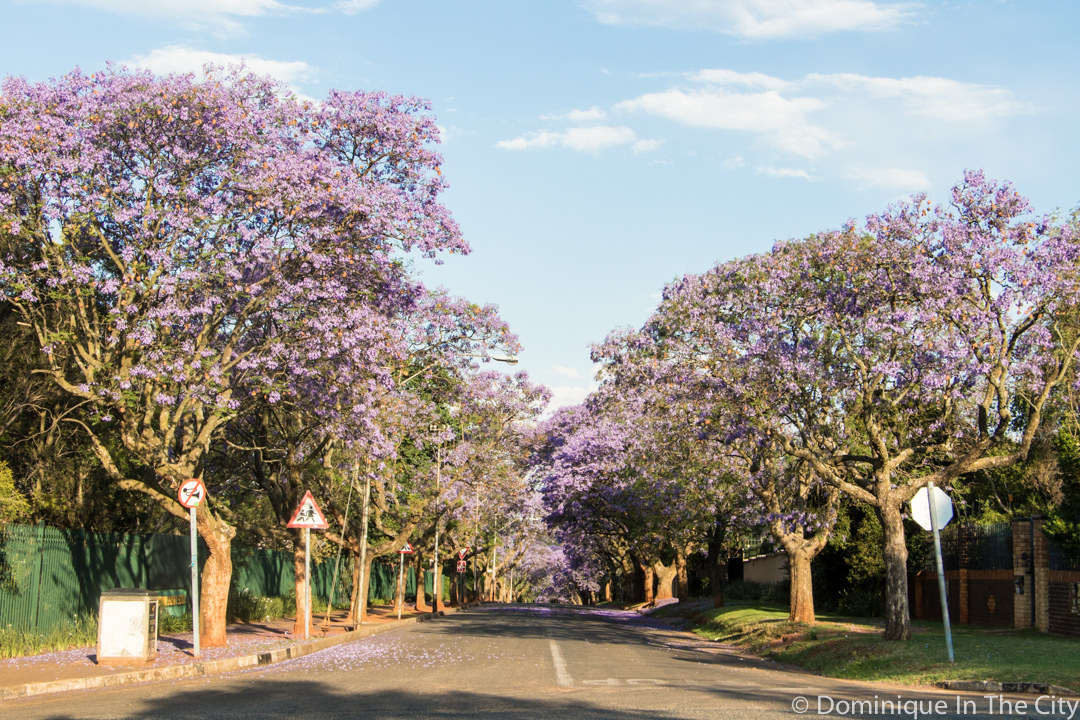 dominique-in-the-city-jacaranda-10