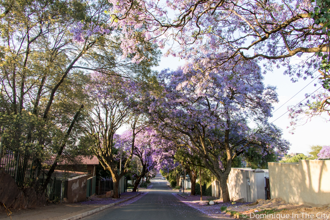 dominique-in-the-city-jacaranda-15
