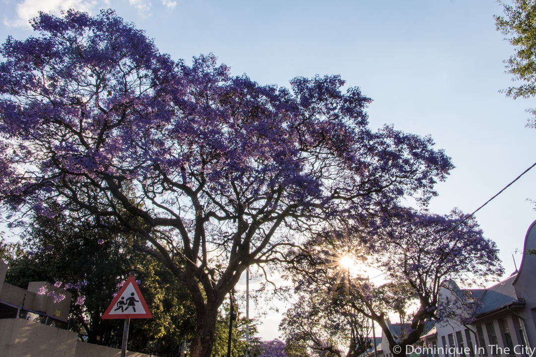 dominique-in-the-city-jacaranda-16