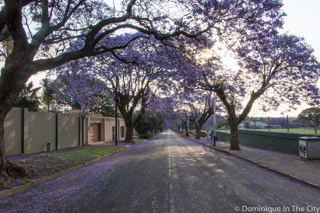 dominique-in-the-city-jacaranda-17