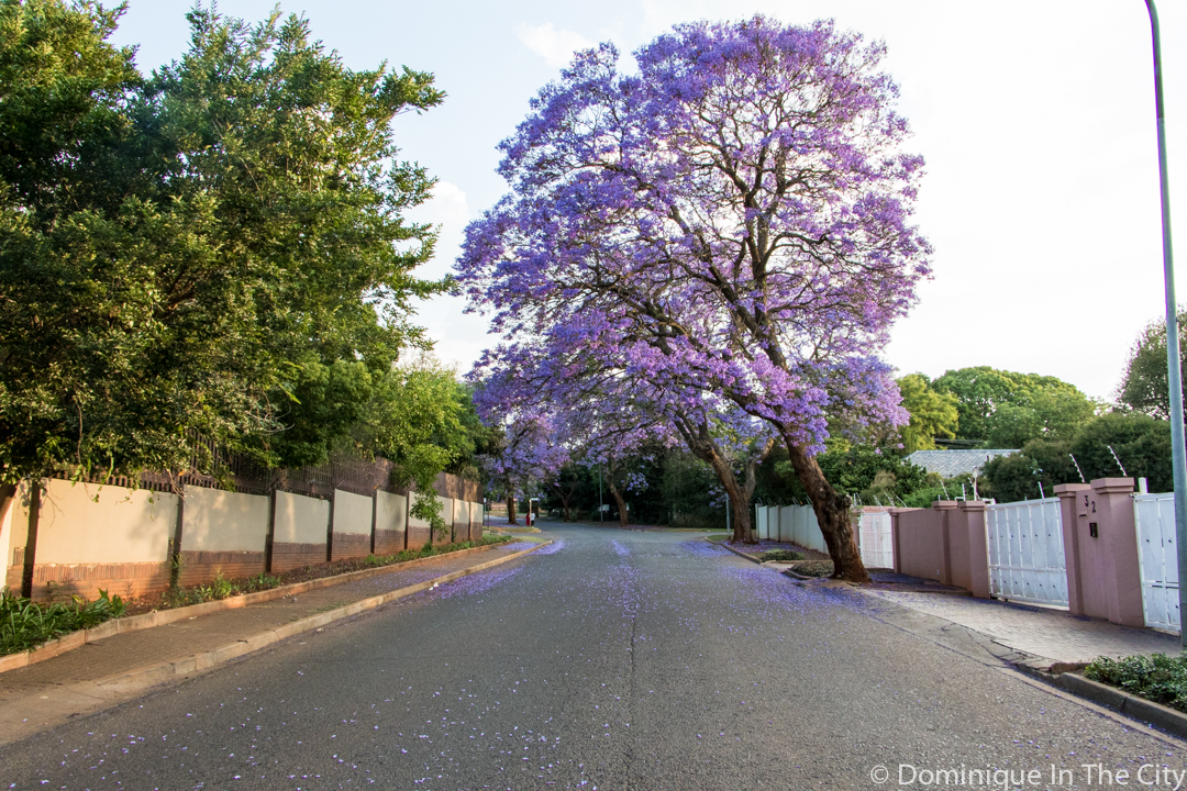 dominique-in-the-city-jacaranda-19