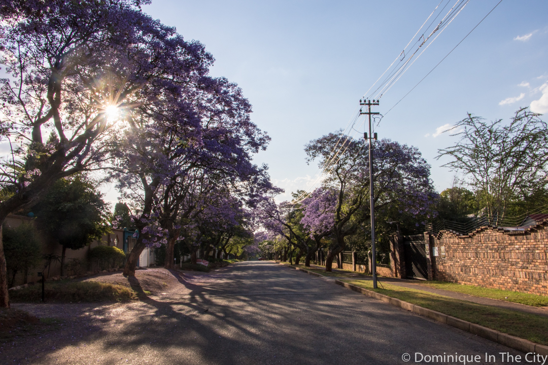 dominique-in-the-city-jacaranda-7