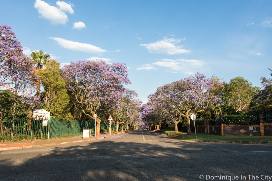 dominique-in-the-city-jacaranda-9