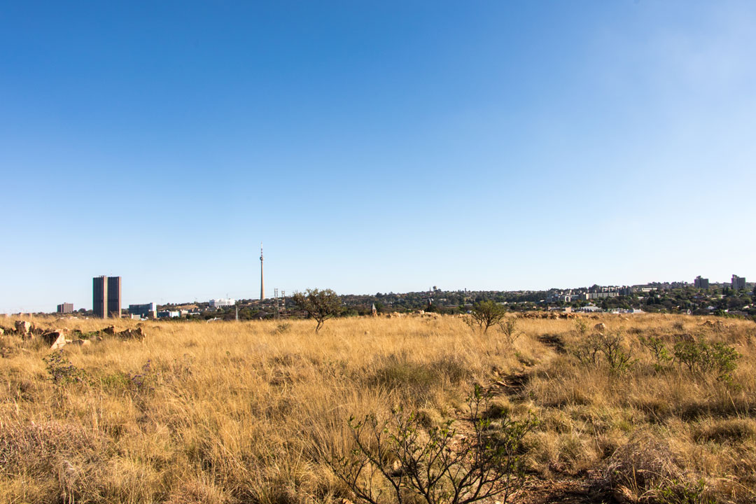 Dominique-in-the-city-Melville-Koppies