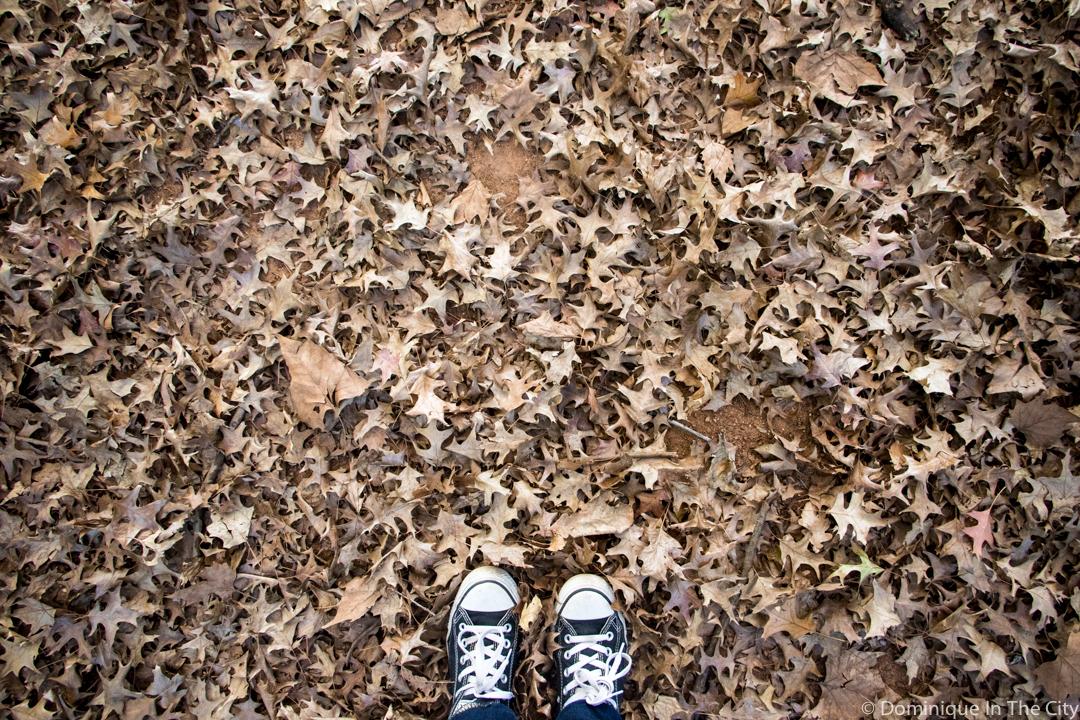 Autumn in Johannesburg