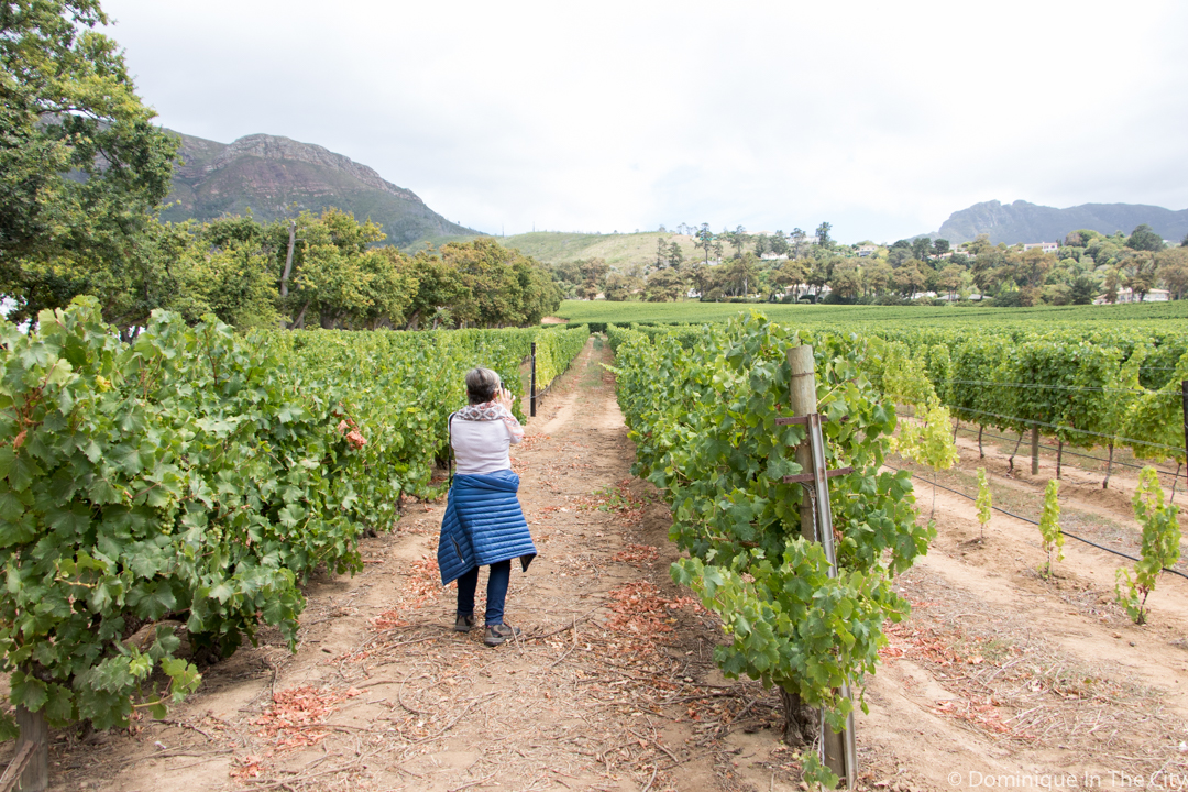Harvest Celebration At Groot Constantia