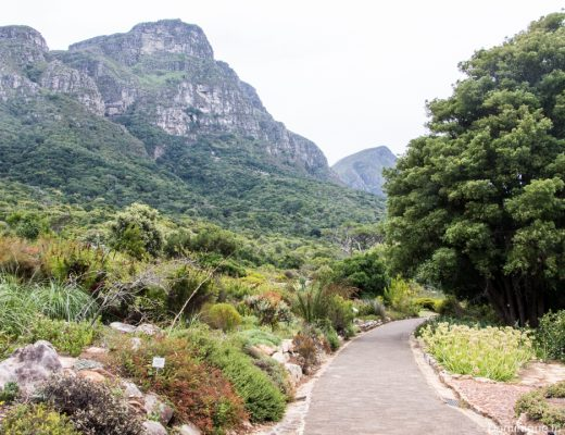 Kirstenbosch National Botanical Garden